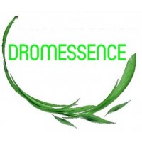 DROMESSENCE