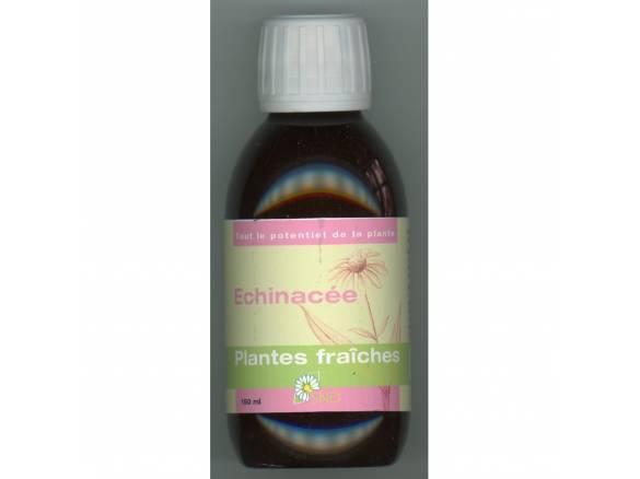 Echinacea - plantes fraiches - SND