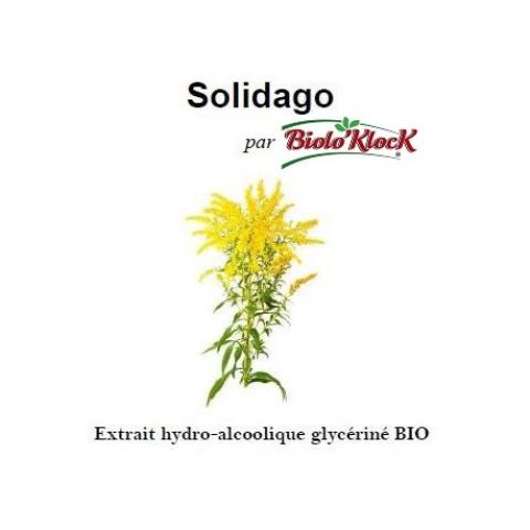 Extrait de Solidago - 100ml