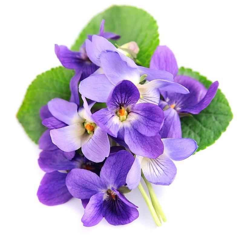 Huile essentielle de Violette (absolue) 5 ml DROMESSENCE