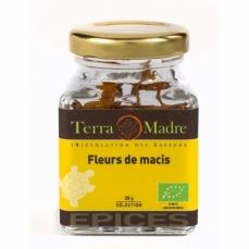 TERRA MADRE - Fleur de macis bio