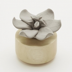 Fleur aromatique Jasmin