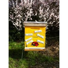 Parrainage citoyen de ruche - Formule Petite Butineuse