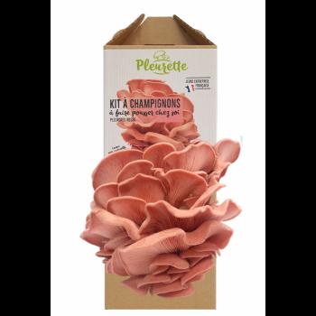 Kit à champignons à faire pousser chez soi - Pleurotes roses