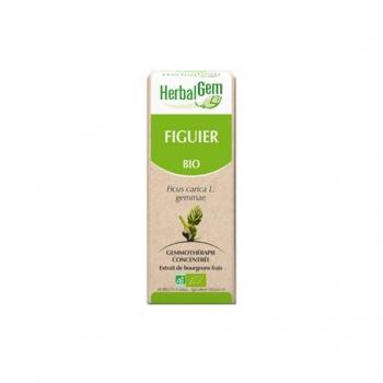 Figuier Extrait Bio - 50ml - HerbalGem