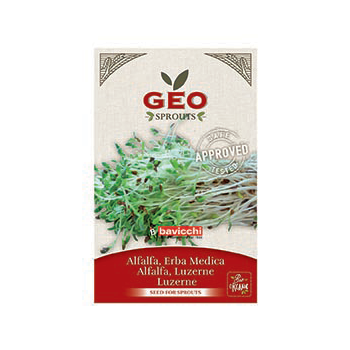 Luzerne (Alfalfa) - Graines à germer bio - 40g - Geo