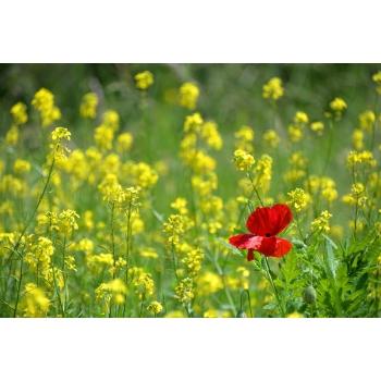 Parfum personnalisé aux huiles essentielles bio