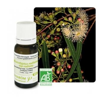Eucalyptus Radié HE Bio - Pranarom