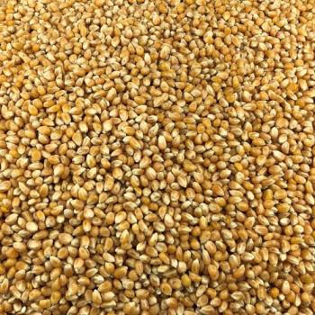 Maïs Pop Corn Bio en Vrac 25kg