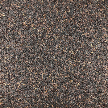 Riz Noir Bio en Vrac 500g