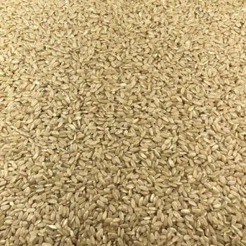 Riz Rond Complet Bio en Vrac 10kg