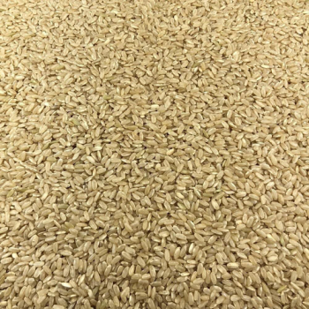 Riz Rond Complet Bio en Vrac 25kg