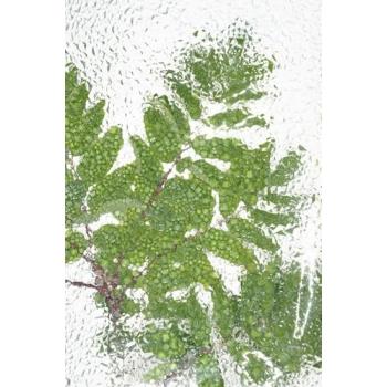 """""""texture verte"""" papier peint vinyle 158x250 cm"""