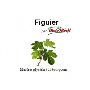 Macérat de bourgeons de Figuier - 15ml