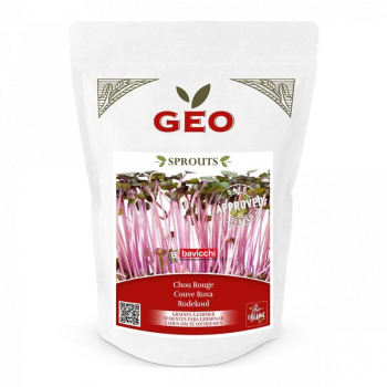 Chou Rouge - Graines à germer bio - 300g - Geo