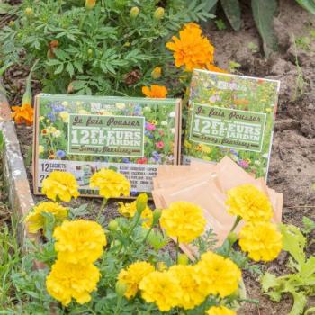 coffret-de-graines-fleurs-du-jardin-12-varietes