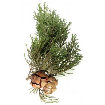 Huile essentielle de cyprès de Provence bio 5ml
