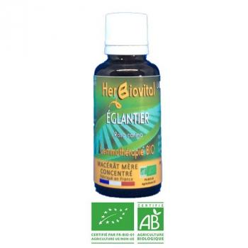 Eglantier-Gemmotherapie-Bio-Herbiovital-DéfensesNaturelles