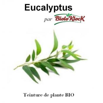Extrait d'Eucalyptus - 100ml