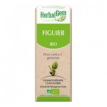 Macérat de Figuier - Concentré de bourgeons Bio - 15ml
