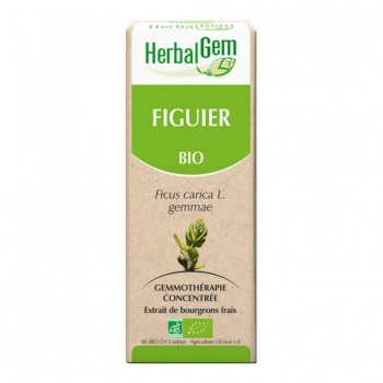 Macérat de Figuier - Concentré de bourgeons Bio - 50ml