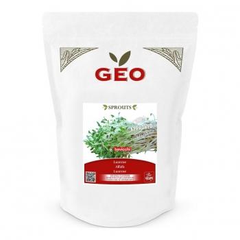 Luzerne (Alfalfa) - Graines à germer bio - 500g - Geo