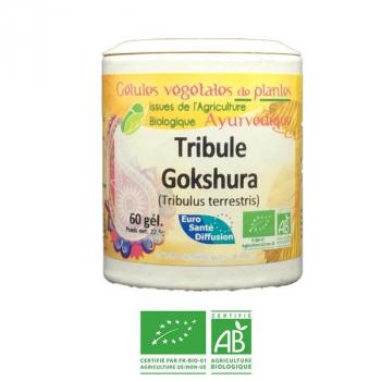 Gokshura-Ayurveda-Bio-Herbiovital-Urogenital