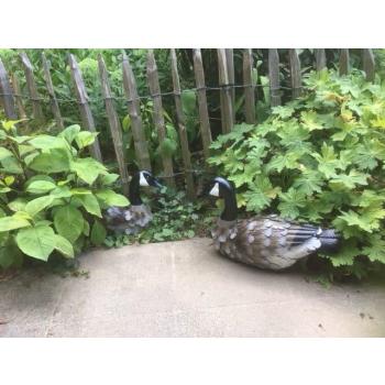 Duo de canards , décoration de jardin en métal peint