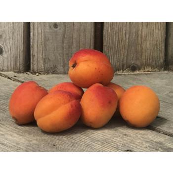 Abricots de saison bio - 3kg