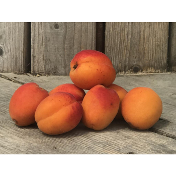 Abricots de saison Bio - 500gr