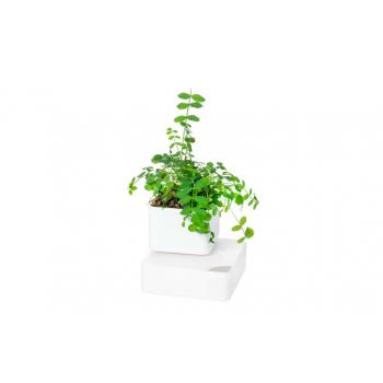 UNO: Le vase en terre cuite avec auto-irrigation 100% naturel