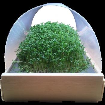 kit domus+ micro-pousses en lumière directe