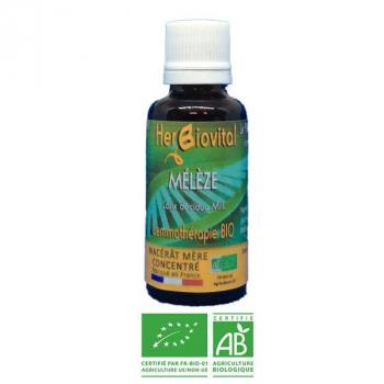 Mélèze-Gemmotherapie-Bio-Herbiovital-Allergies
