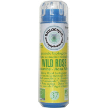Fleur de Bach N° 37 WILD ROSE (Eglantier)  granules SANS ALCOOL 130 granules