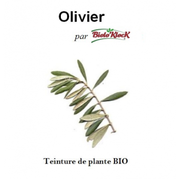 Extrait d'Olivier - 100ml
