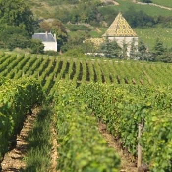 Les vignes bio du Domaine Chapelle