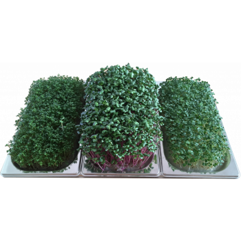Kit Potagium Domus+ triple cultivé