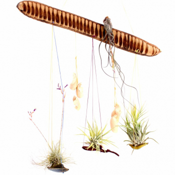 Suspension plantes sans terre