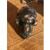 Pierre Llanite mini crâne de Meditation