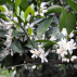Huile essentielle de Petit grain Mandarinier (à linalol) 5ml
