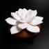 Fleur à parfumer STAR de JAVA